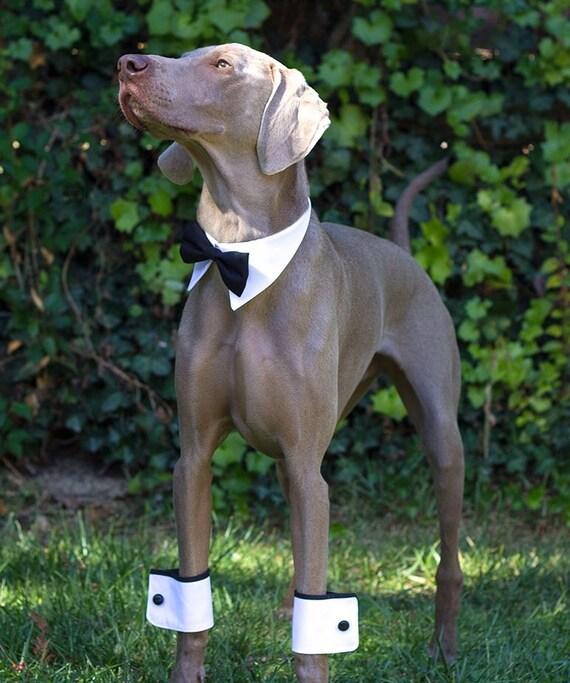 A pair of Dog cuffs for party wedding dog wedding accessory