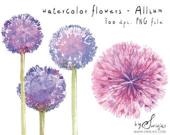 Watercolor Clipart, Watercolor Flowers, Flower Clipart, Allium, Watercolour Clipart