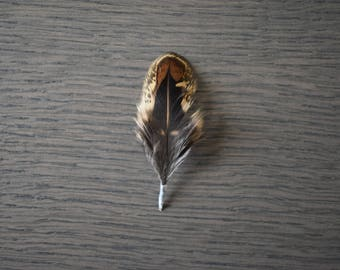 10 × 6CM small chocolate-colored pheasant feathers