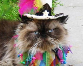 Dog_Cat Birthday Hat/Cat_Dog Party Hat /Cat_Dog party collar and birthday hat- Mad Hatter top hat for cat or dog and party collar