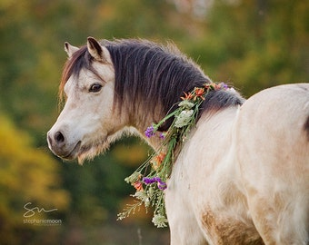 Horse Photography, Pony with flowers in mane, Flower Pony picture, Girl's Room decor, Picture of Horse, Equine Art, Horse Art, Cute Pony