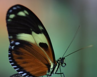 Flower Photography, Butterfly Photography, Fine Art, Photo, Print, Macro Photography, Nature, Gift, Friend, Home, Decor