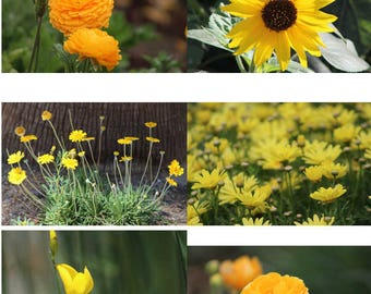 Your Choice Yellow & Gold Flowers Fine Art Photograph Daisy, Sunflower, Birds Of Paradise Flowers Postcards Mother's Day Gift