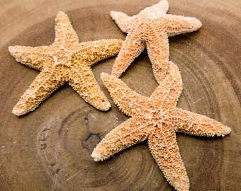 Starfish-- Gorgeous Starfish- Amazing Wonder Of Nature (RK2B15-02)