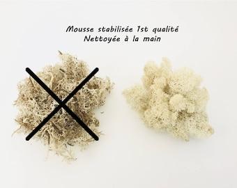 Stabilized foam, Moss, white foam dried, terrarium, reindeer Moss, Moss, lichen