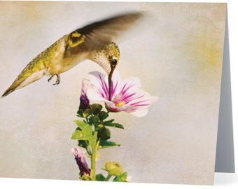 Hummingbird at Zebra Mallow - blank note card, Gifts for her, Gifts for mom, Gifts for bird lovers, Gifts for nature lovers
