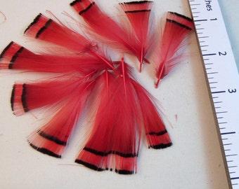 Goldfasan Pelerine Federn rot 10pk Handwerk federn fliegen binden Federn
