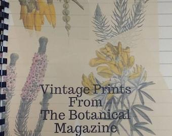 Bound Book of Vintage Botanical Prints