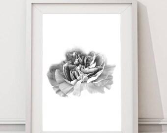 Carnation Flower | Large Art Print Nordic Kitchen Printable Art Minimalist Botanical Nature Black and White Photography Prints Nordic Design