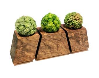 Geometric Maple Wood Succulent Planter (Set of 3)