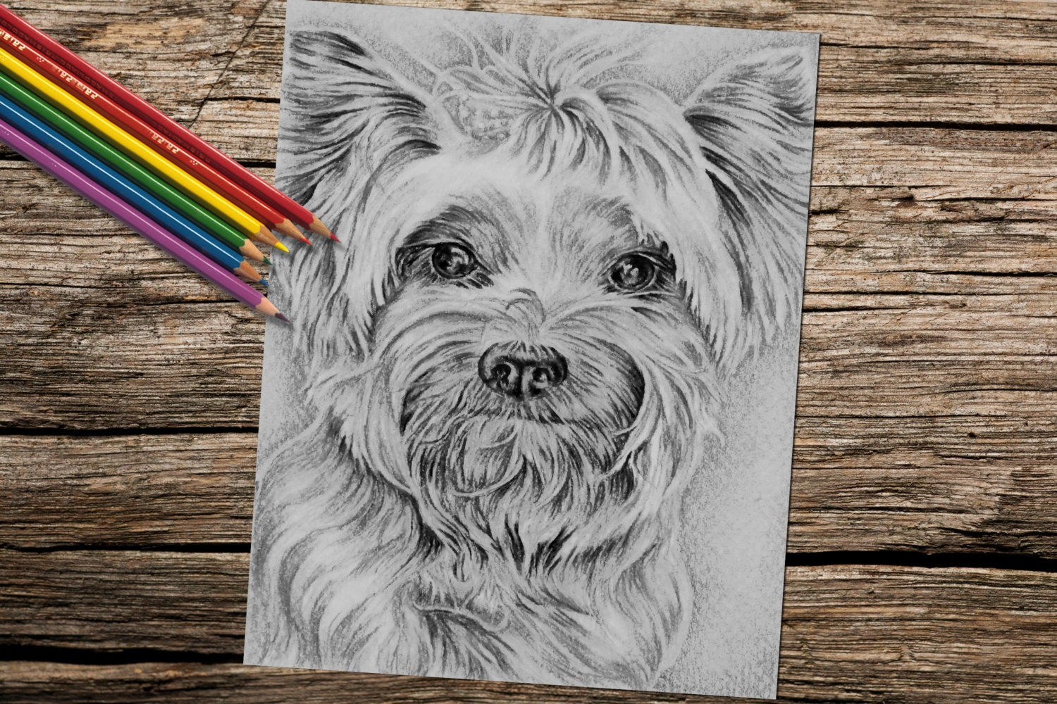 Yorkie dog coloring book page adult coloring book coloring