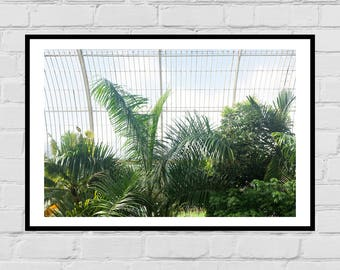 Botanic Garden Ferns photography digital print