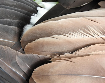 Wildlife Photography bird feathers photo print