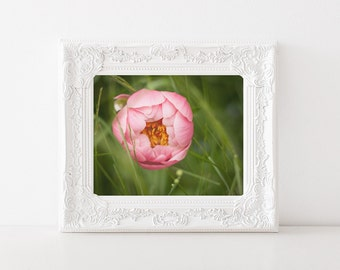 Girl Baby Nursery Decor - Peony Print - Pink Peony - Floral Photograph - Spring, Dreamy Photo - 5x7 Peony Art - Nature Photography