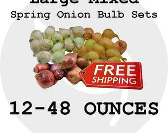 Spring LARGE Onion Bulb Sets (Choice Mixed - Red, White, Yellow) - Organically Grown Seed Onions, Non-GMO - Free Shipping!