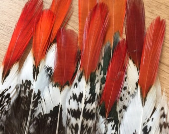Lady Amherst Pheasant feathers / natural feathers, real feathers, unique feathers, smudge feathers, unusual feathers, orange tip, patterned