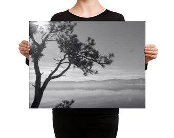 Black and White, Canvas Print, Windblown Tree, Tree Silhouette, Montana Photo, Flathead Lake, Bigfork Montana, Winter Photo, Dark Shadows