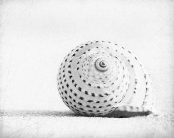 "Black and White Seashell Photography - beach sea shell wall art white light grey gray coastal - 8x10, 11x14 Photograph, ""Seashell Voices"""