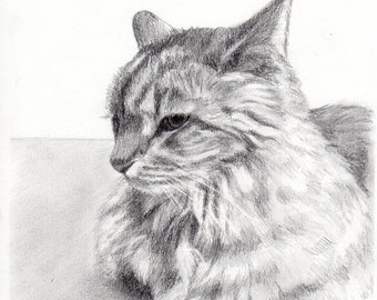Custom Pet Portrait Graphite Pencil 8x10 hand drawn