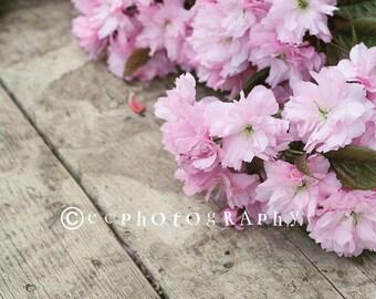 Stock photo, blossom.