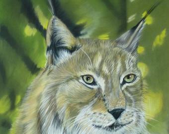 Lynx - Art animalier
