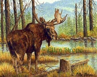 Card Moose Aspen Trees Bull Moose Winter Snow Note