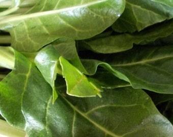 Heirloom Sorrel herb seeds 3.00gr 1100 - 1200 seeds