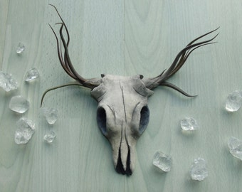 Small Faux Cow Skull 'Sahara' - Airplant Skull - Hand Sculpted Clay - Hand Painted - Unique Home Decor - Faux Taxidermy  - Decorative Skull