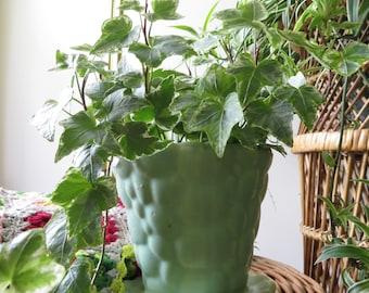 Vintage Mint Green Planter - Scalloped Design