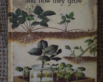 Plants and how they grow. A Vintage Ladybird Natural History Book. First Edition. 1965