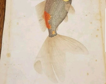 Antique Chinese Qing era painting of a Goldfish