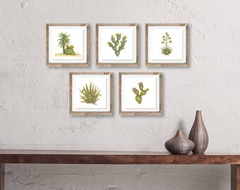 Variegated Agave Signed Archival Watercolor Print
