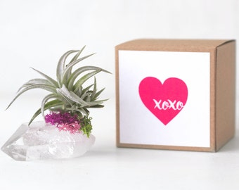 Anniversary Gift, Best Friend Gift, Girlfriend Gift, April Birthday Gift, Romantic Gift, Cute Gift, Quartz Crystal Air Plant,Gift For Mom
