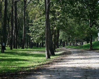 Woodland Road Art Photograph — Serene Verdant Forest — Nature Art Photography by Liberty Images — Lush Green Grass and Leaves — Stone Road