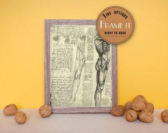 "Vintage illustration of muscles by Leonardo da Vinci - framed fine art print, art of anatomy, 8""x10"" ; 11""x14"", FREE SHIPPING - 215"