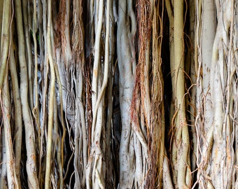 "Tree Art, Nature Photography, Hawaiian Art, Banyan Tree, Roots, Fine Art Print, Oahu, Abstract Wall Art, Tree Wall Decor - ""Roots"""