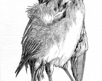 Original art-- Bird 17x7.5 in