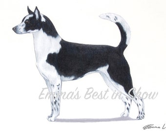 Canaan Dog - Archival Quality Fine Art Print - AKC Best in Show Champion - Breed Standard - Herding Group - Original Art Print