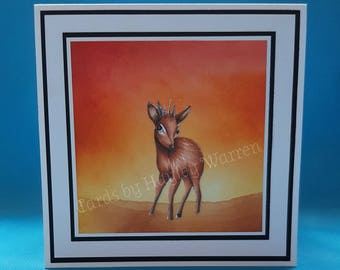 Dik-Dik Antelope - image no 120