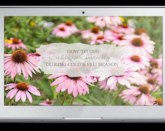 How To Use Echinacea Correctly During Cold And Flu Season - Mini-Course Video & Transcript - Herbalism - Herbal Remedies
