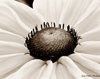 Cottage Chic, Brown Toned Photography, Sepia Photos, Black Eyed Susan, Romantic Decor, Shabby Chic, Flower Photography, Flower Prints, Art