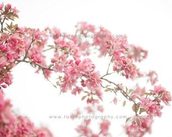 Spring Blossoms No. 1