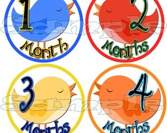 12 PRECUT Monthly Stickers set Baby Shower gift 1- 12 Months Infant month stickers OnePiece first year Belly stickers Baby Boy Bird decals