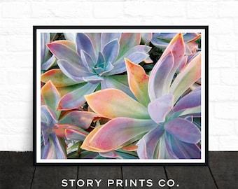 Succulents and Cacti, Garden Plant Print, Botanical Print, Nature Print, Plant Prints, Echeveria, Flowering Plants, Green, Printable Art