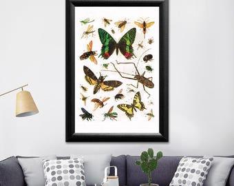 Bugs and butterflies wall art, butterfly print, bug print, butterfly art, bug poster, butterfly art print, bug art hanging, butterfly poster
