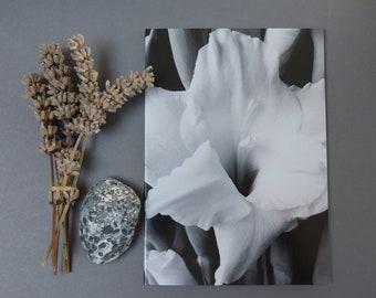 Black & White Gladiolus, Photographic card, notecard, botanical, flower, natural, thinking of you