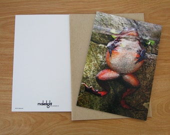 Frog Greeting Card - Blank Inside - Set of 6