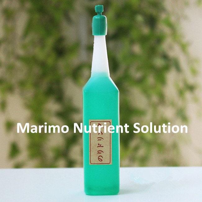 Marimo aquarium kit with glass jar/moss ball/white stones/sea