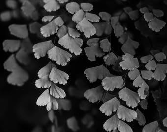 Black & White Botanical Print