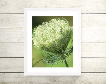 Queen Anne's Lace | Flower Photography Color Print | 11x14, 8x10 or 4x6 (Custom Sizes Available Upon Request)